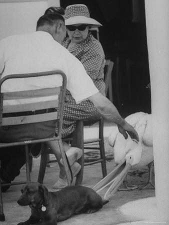Dachshund Ignoring Pelican's Teasing by James Burke