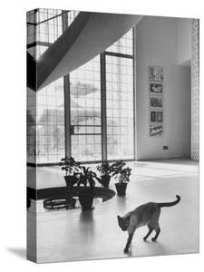 Siamese Cat in Reception Hall of Residence of Us Ambassador to India by James Burke