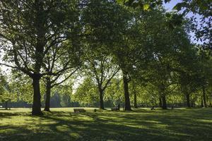 Morning Sunlight, St. James Park, London, England, United Kingdom by James Emmerson