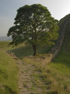 Sycamore Gap, Hadrian's Wall, Nothumberland by James Emmerson