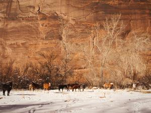 A Herd of Horses in a Snowy Landscape at the Bottom of a Cliff by James Forte
