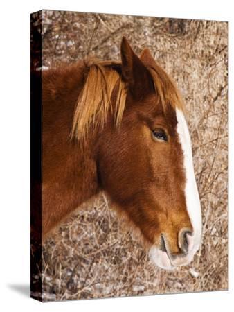 Close Up Profile Portrait of a Horse
