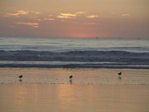 Three Sea Birds Standing in the Surf at Sunset, California by James Forte