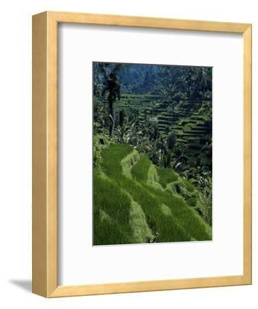 Terraced Rice Fields Near Gagah, Bali, Indonesia, Southeast Asia