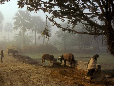 Village Scene, Vaishali, India