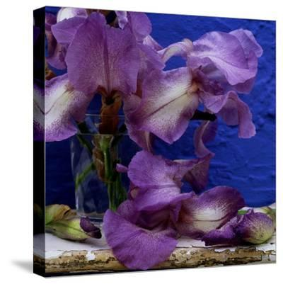 "Bearded Iris ""Blue Shimmer,"" Purple and White Flowers in Glass Vase Against Blue Backdrop"
