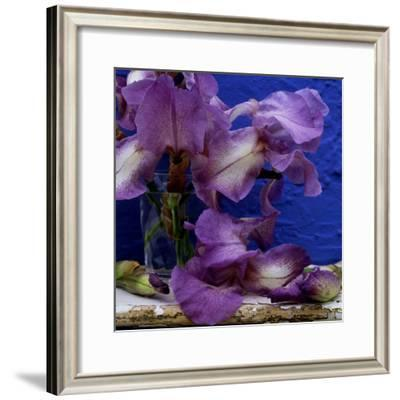 "Bearded Iris ""Blue Shimmer,"" Purple and White Flowers in Glass Vase Against Blue Backdrop"