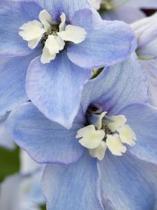 Delpinium Flowers by James Guilliam