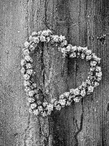 Frosted Heart-Shaped Metal Bell Wreath on Rustic Wooden Background by James Guilliam
