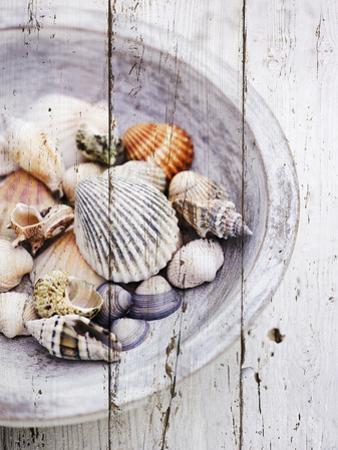 Nantucket Shells I