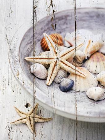 Nantucket Shells IV