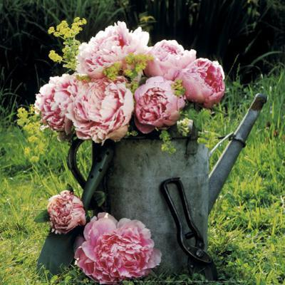 Watering Can And Peonies