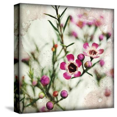 Wax Flower I