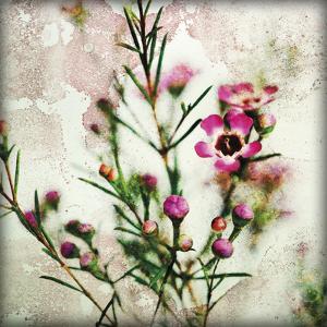 Wax Flower II by James Guilliam