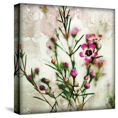 Wax Flower II