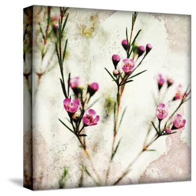 Wax Flower III