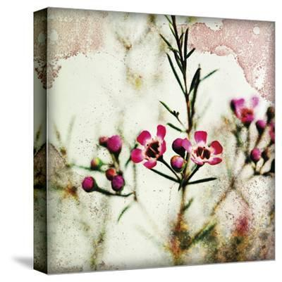 Wax Flower IV