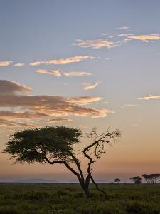 Acacia Tree and Clouds at Dawn by James Hager