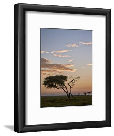Acacia Tree and Clouds at Dawn