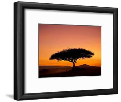 Acacia Tree Silhouetted at Dawn, Masai Mara Game Reserve, Kenya, East Africa, Africa