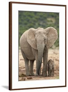 African Elephant (Loxodonta Africana) Mother and Baby by James Hager