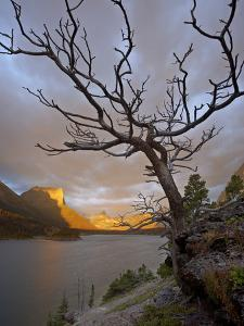 Bare Tree at Sunrise, St. Mary Lake, Glacier National Park, Montana, USA by James Hager