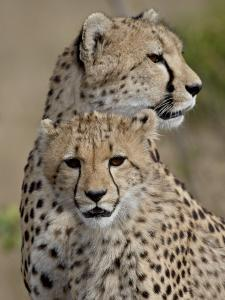 Cheetah Cub and Mother, Masai Mara National Reserve by James Hager