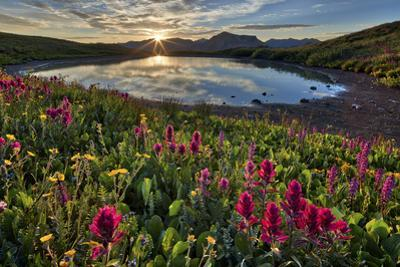 Sunrise over Alpine wildflowers, San Juan National Forest, Colorado, United States of America, Nort by James Hager