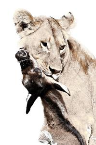 The Kill. A Lioness with a Blue Wildebeest Calf, Serengeti National Park, East Africa by James Hager