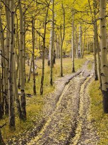 Two-Track Lane Through Fall Aspens, Near Telluride, Colorado by James Hager