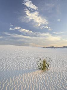 Yucca Growing in Rippled Sand, White Sands National Monument, New Mexico, USA by James Hager
