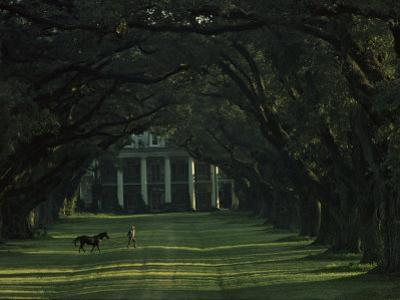 A Man Leads His Horse at Oak Alley, an Antebellum Sugar Plantation by James L. Stanfield