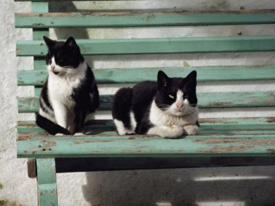 A Pair of Cats on a Bench by James L^ Stanfield