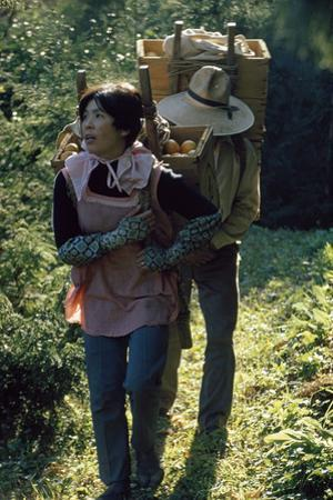 Farmers Carry a Load of Tangerine-Like Mikan Fruit on their Back by James L. Stanfield