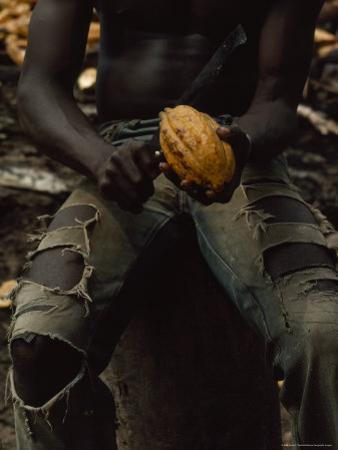 Shirtless, Sitting Man Splits a Cacao Pod with a Knife by James L. Stanfield