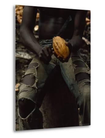 Shirtless, Sitting Man Splits a Cacao Pod with a Knife