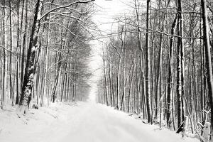 A Snowy Walk III by James McLoughlin
