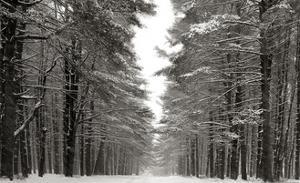 A Snowy Walk IV by James McLoughlin