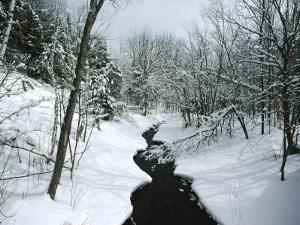 A Winter View of Rush Brook, Camel's Hump State Park, Vermont by James P. Blair