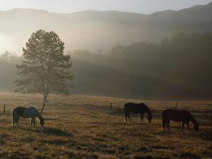 Horses Grazing in a Field with Morning Mist by James P. Blair