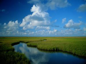 Marsh Canal in Oyster Bayou by James P^ Blair