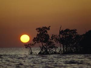Silhouetted Mangrove Trees, Everglades National Park, Florida by James P. Blair