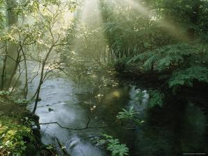 Sunlight Highlights a Small Creek in the Great Smokies, Tennessee by James P. Blair
