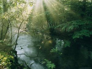 Sunlight Streams Through Trees Above a Creek by James P. Blair