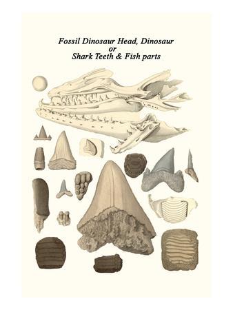 Fossil Dinosaur Head, Dinosaur or Shark Teeth and Fish Parts