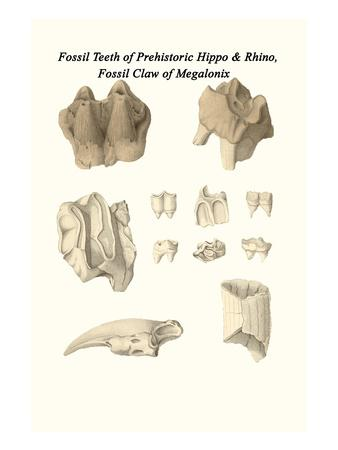 Fossil Teeth of Prehistoric Hippo and Rhino, Fossil Claw of Megalonix