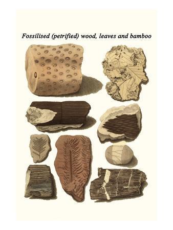 Fossilised (Petrified) Wood, Leaves and Bamboo