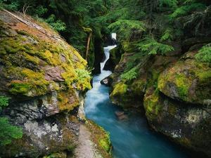 Avalanche Creek by James Randklev