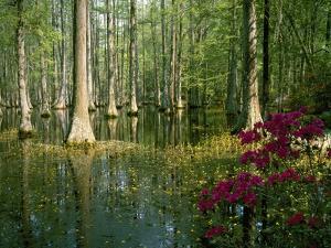 Cypress Gardens in South Carolina by James Randklev