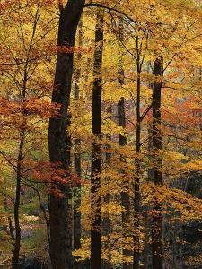 Deciduous Forest in Autumn by James Randklev